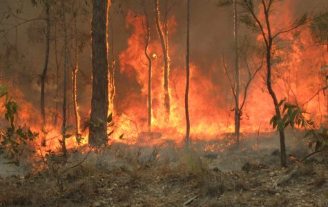 Australian Wildfires Burn Out of Control