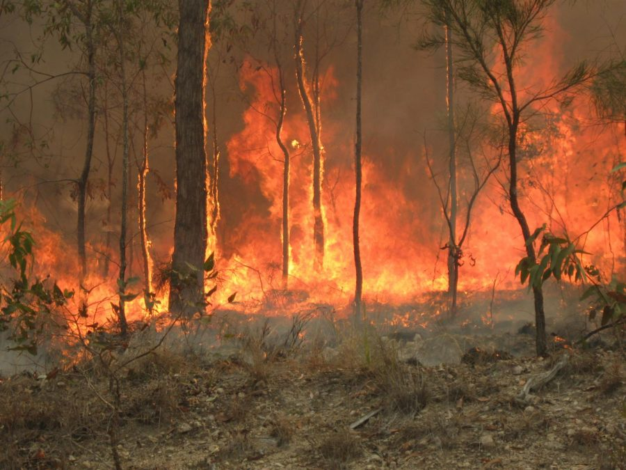 Wildfires in Australia have destroyed an area of land roughly the size of Switzerland.