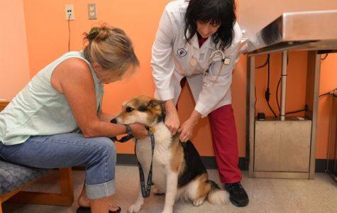 Pets Contract Coronavirus